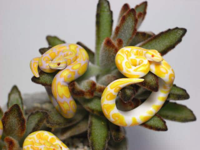 Count Blue Ball Python Ring Cool Accessory to Buy