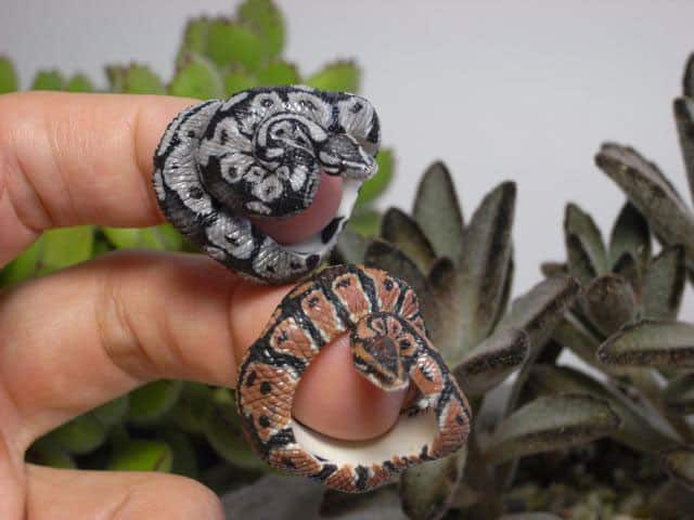 Count Blue Ball Python Ring Snake Lover Gift Idea