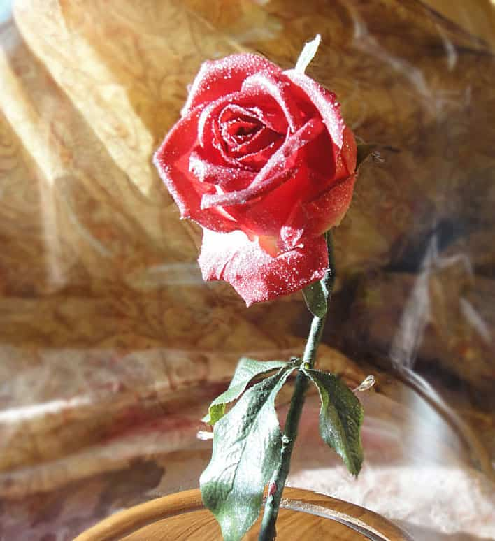 Hands Full of Crafts Beauty and the Beast Inspired Enchanted Rose How to Make Her Smile