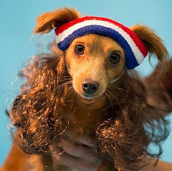 Mullet-On-The-Go-The-All-American-Buy-Cool-Pet-Product