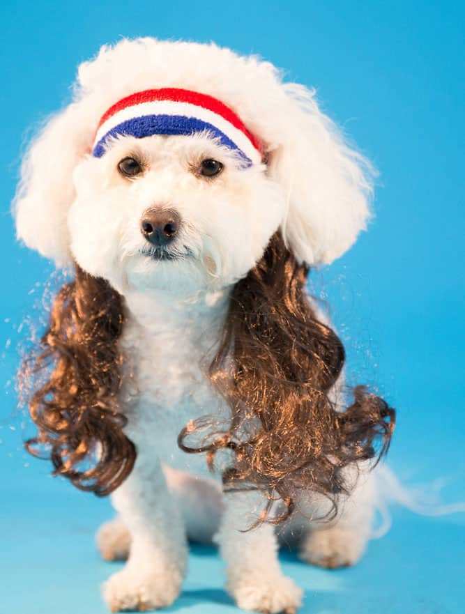 Mullet On The Go The All American Buy Dog Costume