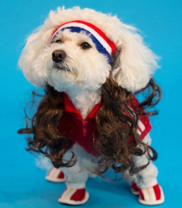 Mullet On The Go The All American Funny Pet Gift Idea to Buy