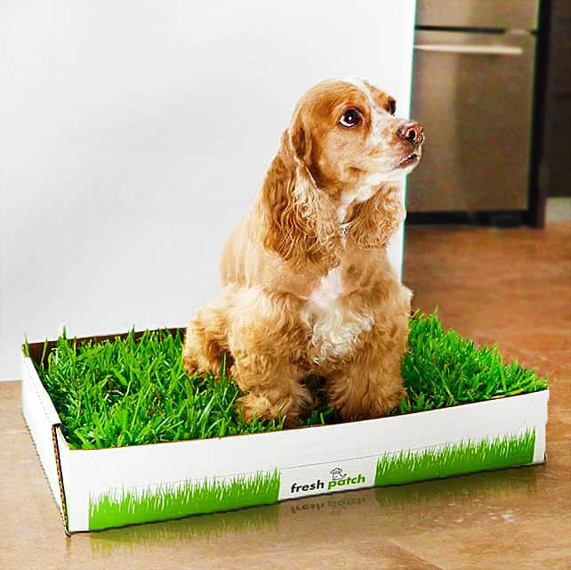 Fresh Patch Disposable Dog Potty Buy Cool Pet Product