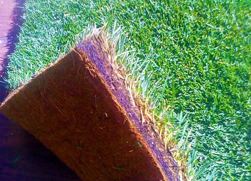Fresh Patch Disposable Dog Potty Real Grass Carpet