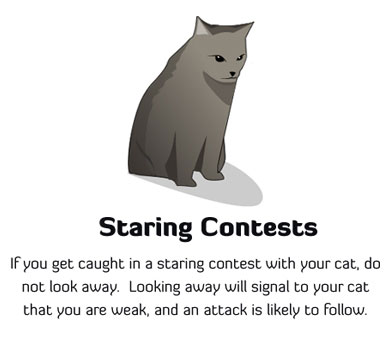 How to Tell If Your Cat Is Plotting to Kill You Feline Staring Contest