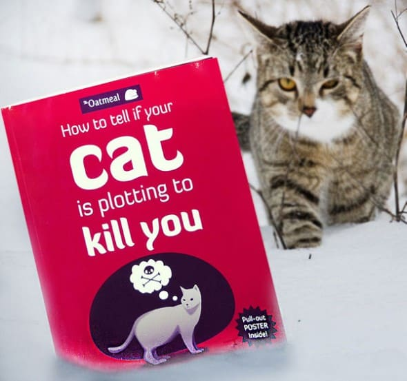 How-to-Tell-If-Your-Cat-Is-Plotting-to-Kill-You-Buy-Funny-Jokes-Pet-Book