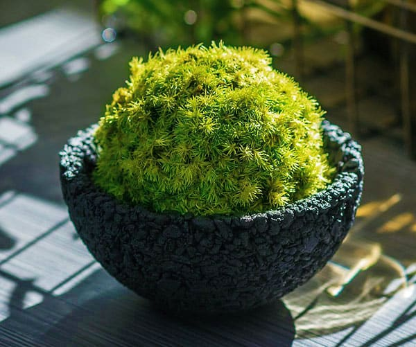Classic Japanese gardening in a bowl.