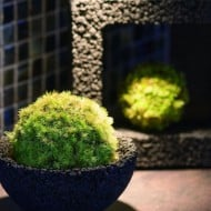 bedroom ideas for couples eco pochi kokedama moss pot noveltystreet 11562