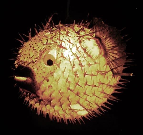 Illuminate the night with a glowing ball of puffer.