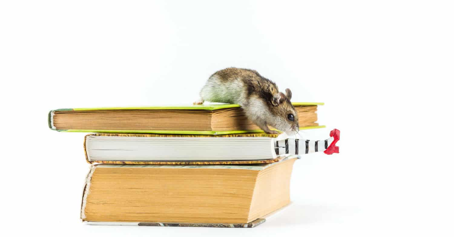 My Bookmark Wicked Witch Bookmark Hamster  on top of books