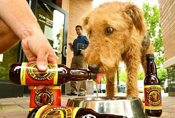 Doggy Beer.