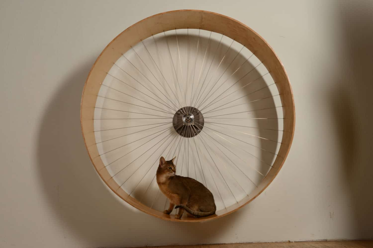 The cats wall wheel Keep Pet in Shape
