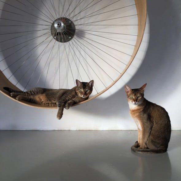 The cats wall wheel Pet Exerciser