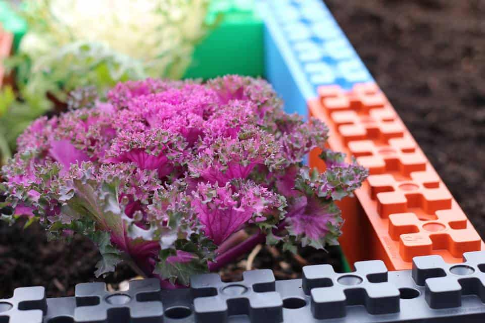TogetherFarm Blocks Colorful Garden
