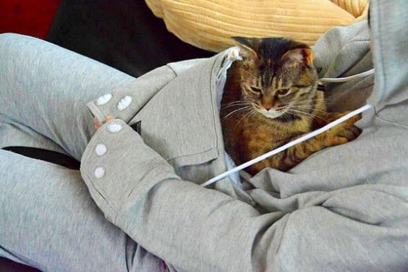 Cat cuddle-friendly clothing.