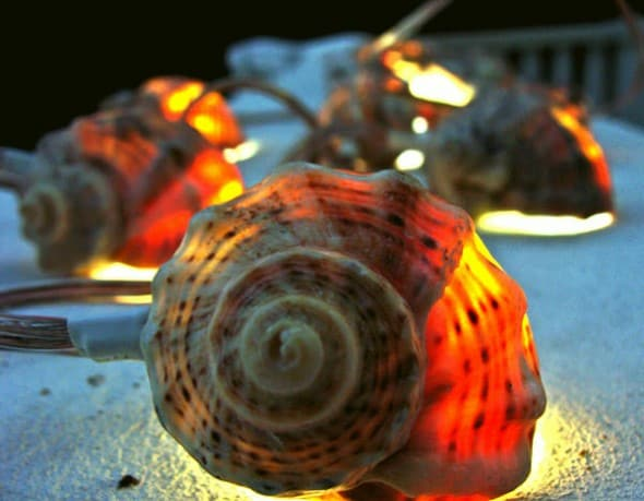 Light up the night with sea shells.