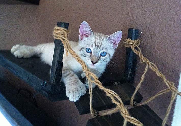 CatastrophiCreations Indiana Jones Cat Bridge Pet Bed