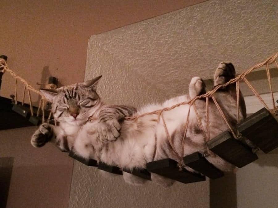 CatastrophiCreations Indiana Jones Cat Bridge Pet Furniture