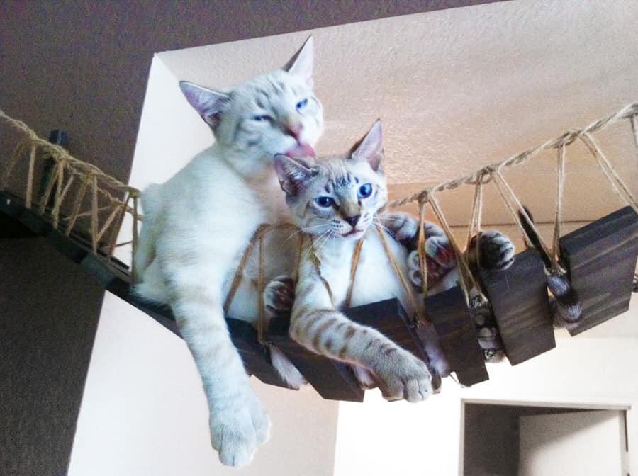 CatastrophiCreations Indiana Jones Cat Bridge Pet Gift Idea
