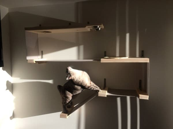 Catastrophicreations Cat Hammock Feeder Station Spoil Pet