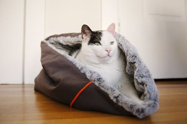 Pet Lifestyle and You Snuggle Pet Bed Cat Gift
