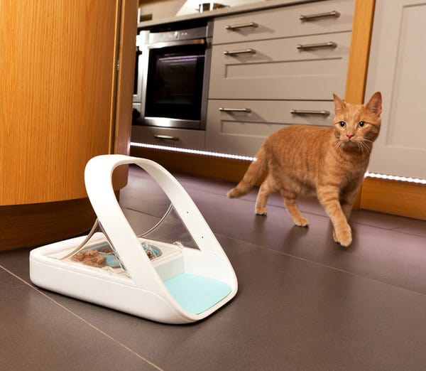SureFeed Microchip Pet Feeder Buy for Cat