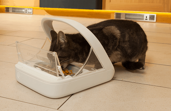SureFeed Microchip Pet Feeder Tech Cat Bowl