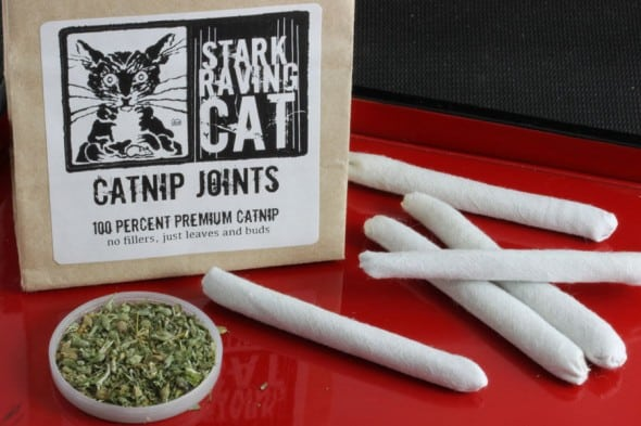 Get your cats some joints.