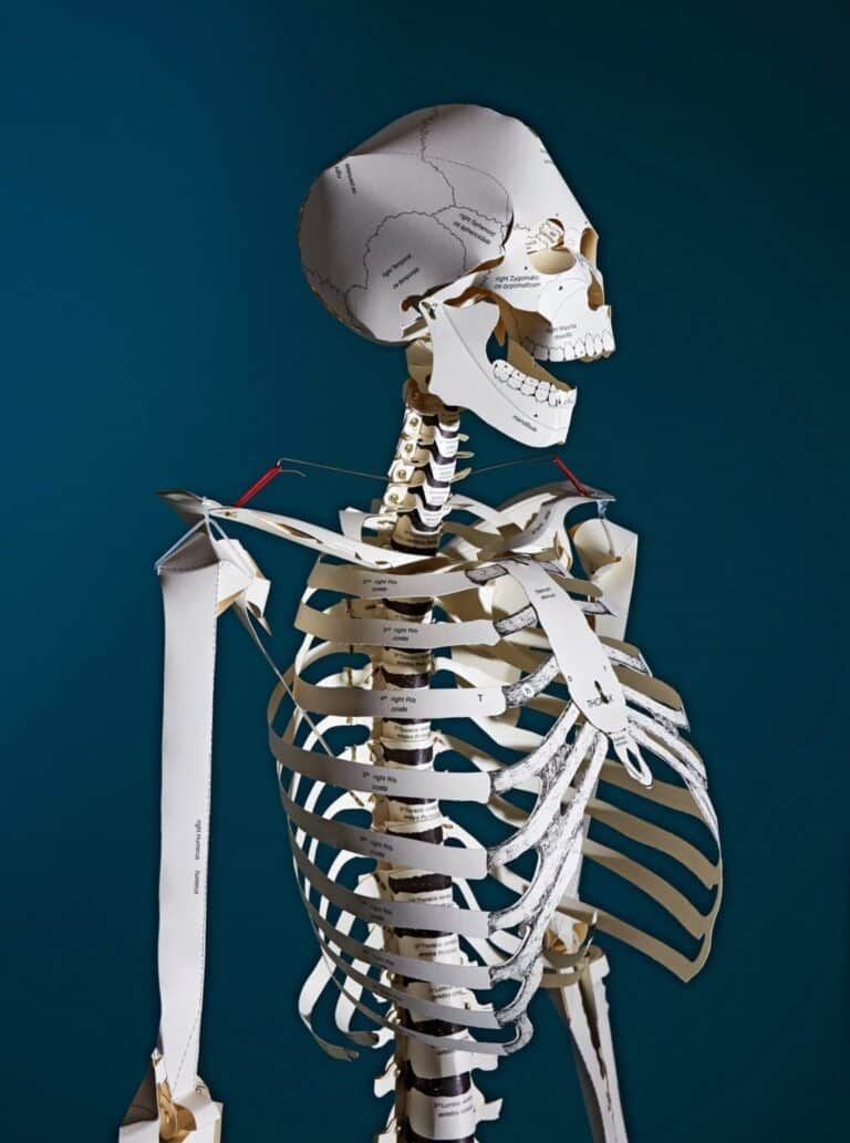 Taschen Build your Own Life Sized Human Skeleton Book Cool Papercraft Kit