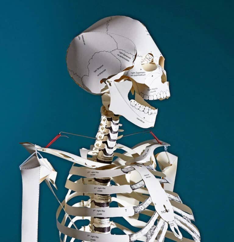 Taschen Build your Own Life Sized Human Skeleton Book Fun Gift for Science Nerds