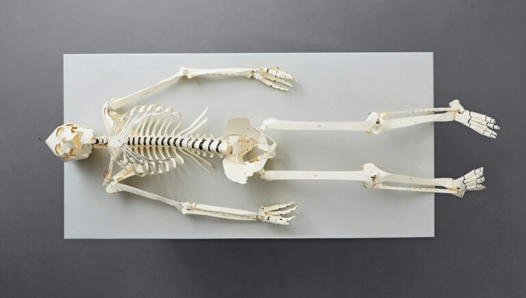 Taschen Build your Own Life Sized Human Skeleton Book Fun Science Learning Tool