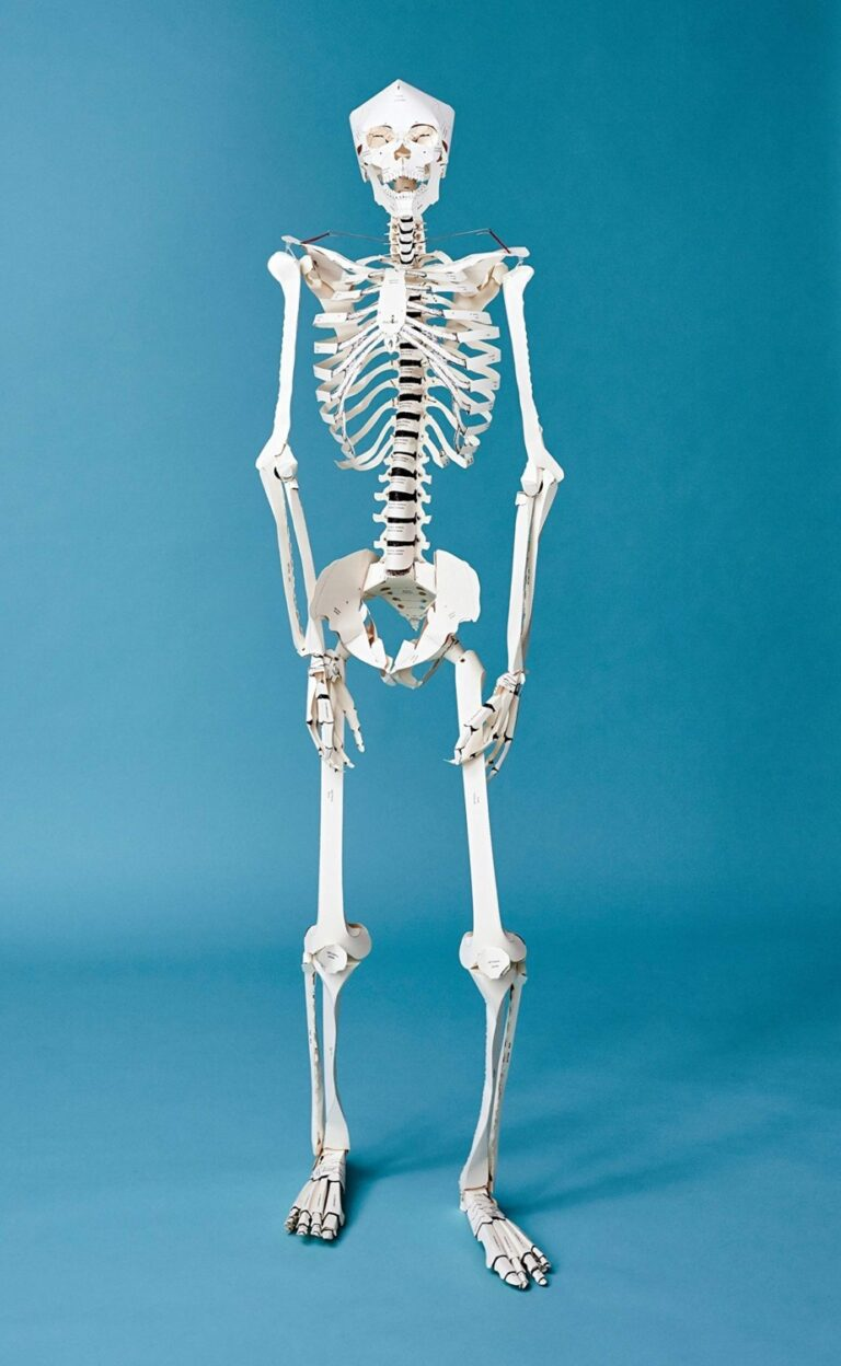 Taschen Build your Own Life Sized Human Skeleton Book Fun Science for Kids