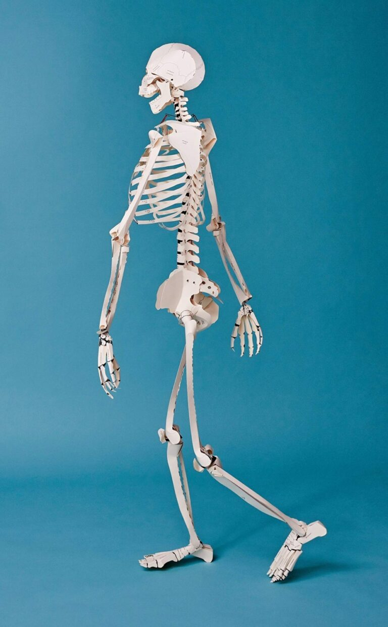 Taschen Build your Own Life Sized Human Skeleton Book Life Size Model