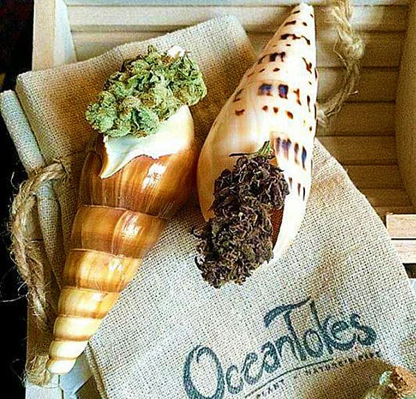 OceanTokes Seashell Smoking Pipe Gift Idea for Pot Head Friends
