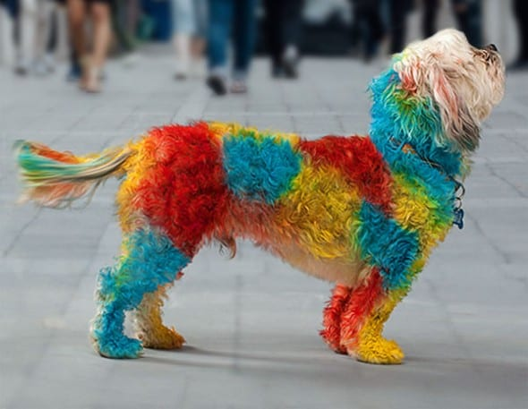 Color your dog awesome!