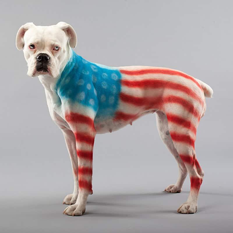 PetPaint Pet Hair Spray US Flag