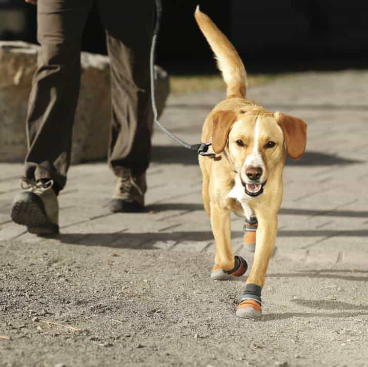 Ruffwear Summit Trex Boots Buy Dog Shoe