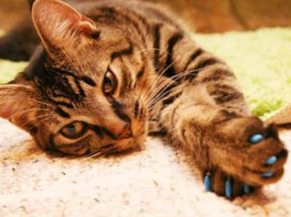 Soft Claws Cat Nail Caps Buy for Pet Lovers