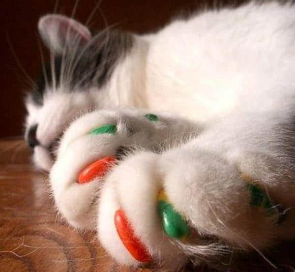Soft Claws Cat Nail Caps Pet Accessory