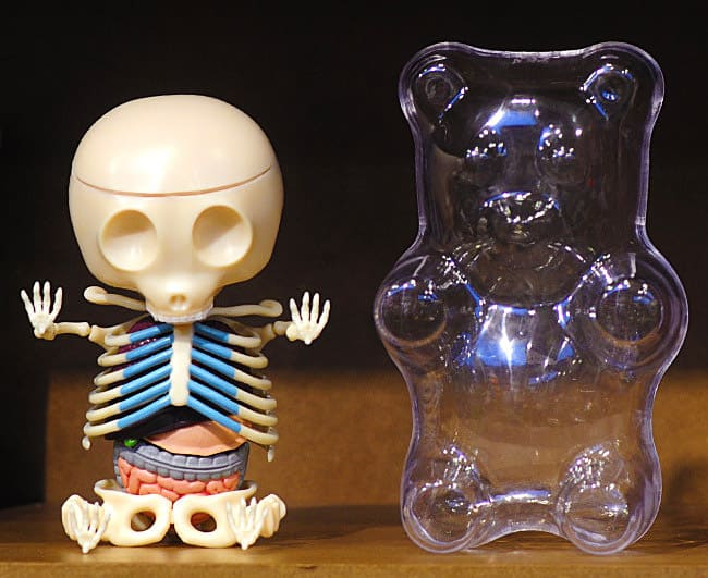 4D Master Gummi Bear Anatomy Model Buy Gift for Geek