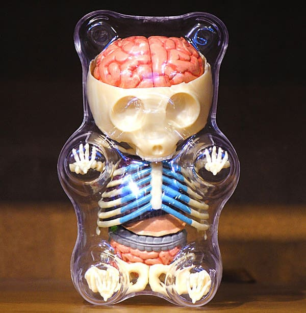 4D Master Gummi Bear Anatomy Model Cool Puzzle to Buy