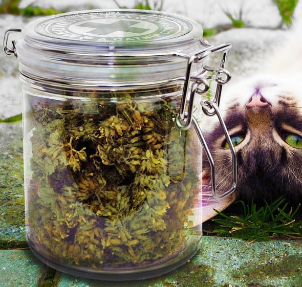 Give your cat a natural high.