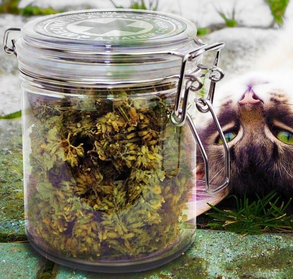 Meowijuana Catnip Buds Cool Things to Buy for Pets