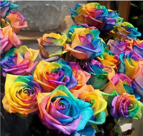 Rainbow Rose Seeds Cool Plants to Buy