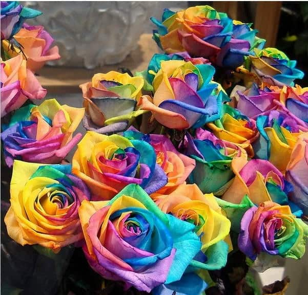 Rainbow roses, because love can't be defined by just a single color.