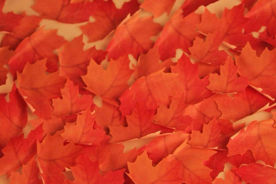 Red Maple Leaf Sticky Notes Fun at the Office
