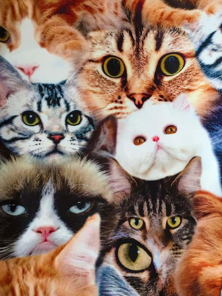 The Power of Greyskull Cat Leggings Feline Montage