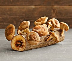 Grow your own mushroom in a log indoors.