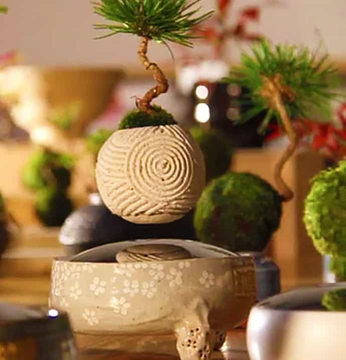 Hoshinchu Air Bonsai Artistic Home Decoration