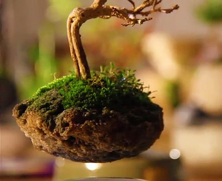 Hoshinchu Air Bonsai Levitating Magnetic Tree